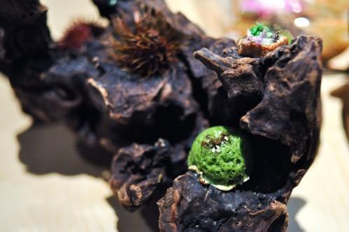 next vegan sprouted tempeh