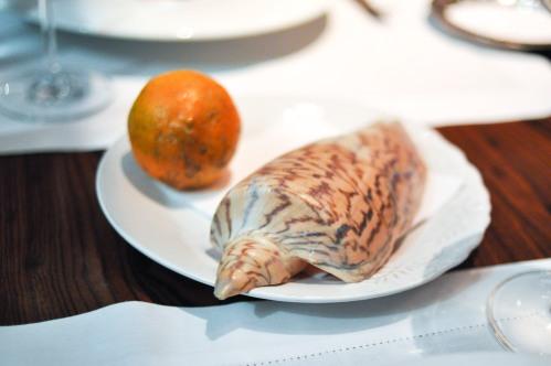 dom sao paulo sea snail brazilian lime