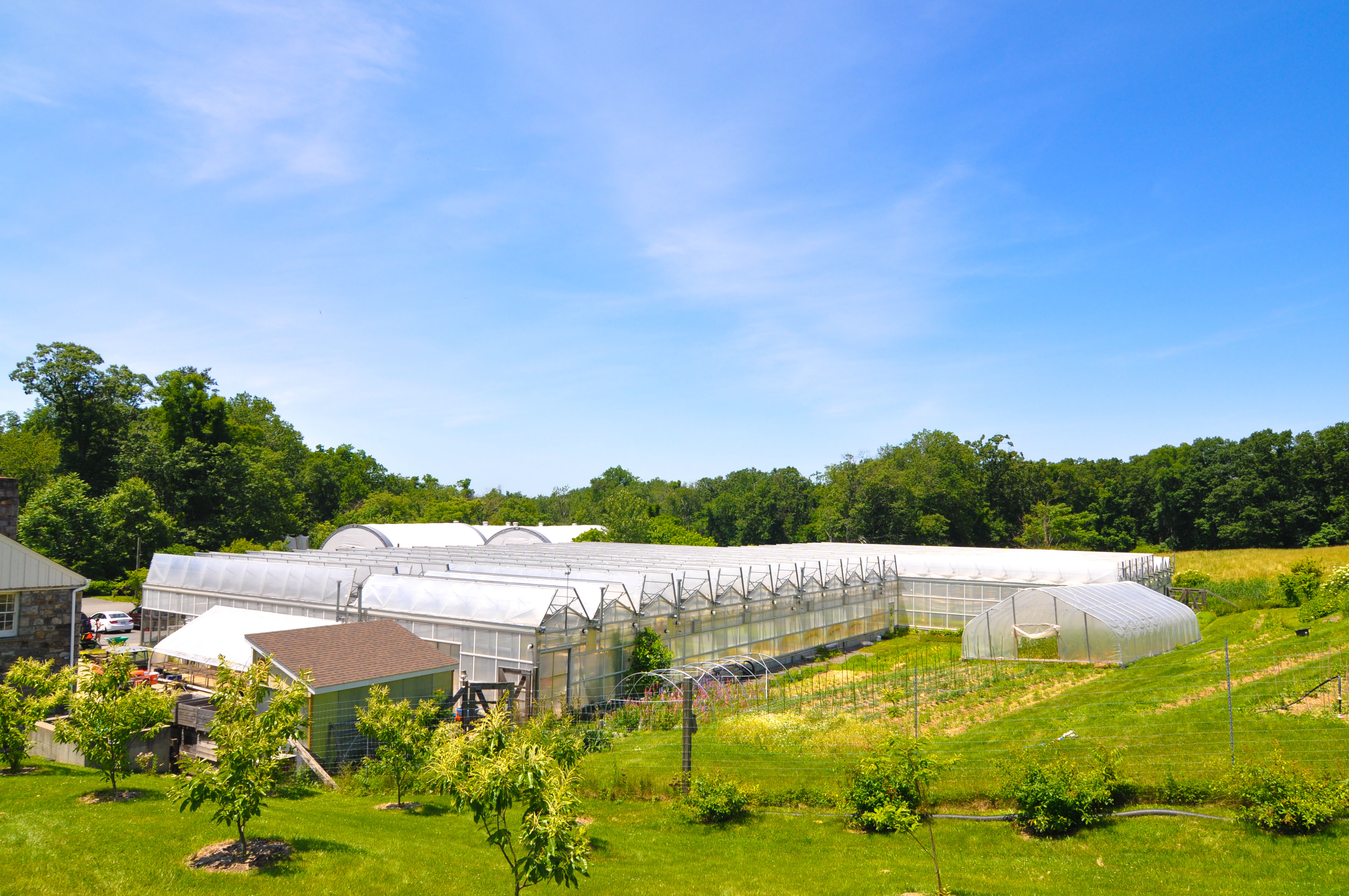 Blue Hill at Stone Barns – Two-a-day, Part 1 | this guy's ...