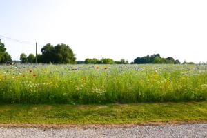 hof van cleve flower field